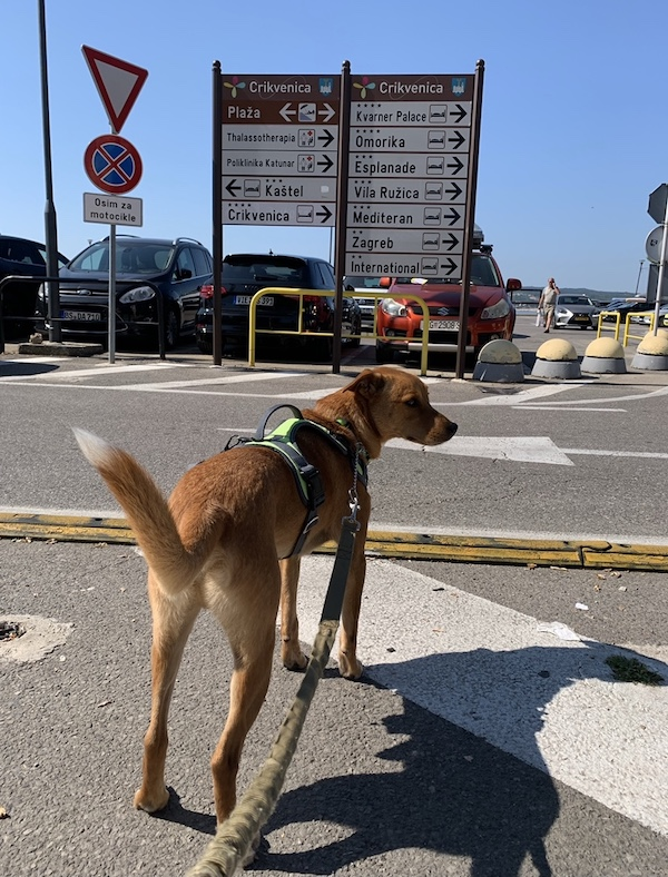 K9sOverCoffee.com | Looking at one of the major parking lots in the Crikvenica harbor area