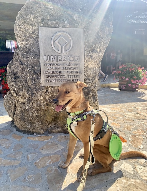 K9sOverCoffee.com | Wally at the UNESCO World Heritage Site Plitvice Lakes National Park in Croatia